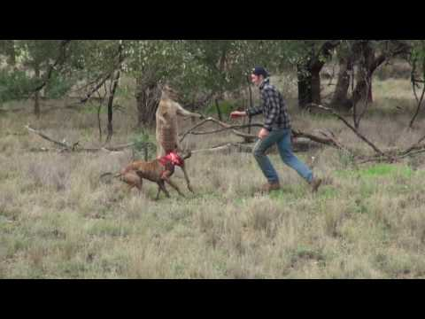 How this man saved a dog from a kangaroo will completely surprise you!