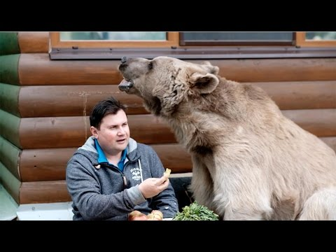 Living with a real bear will be the most incredible thing you will see today!