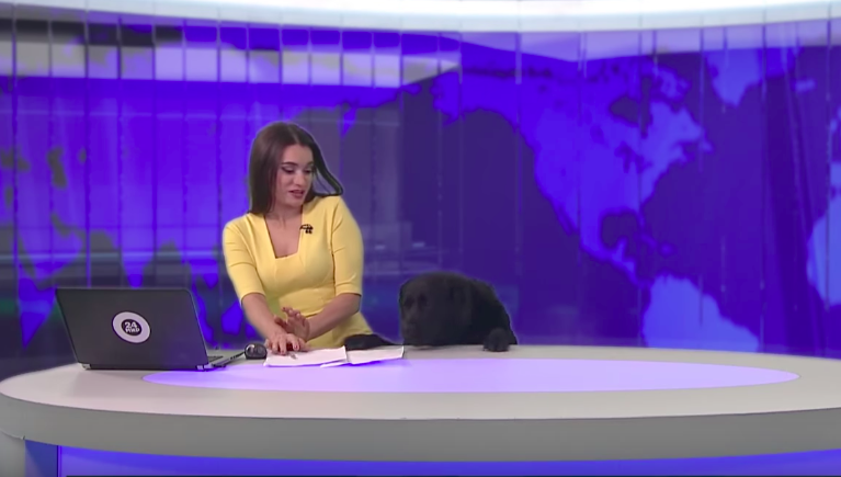 Dog's surprise appearance in a newscast will make you laugh out loud!