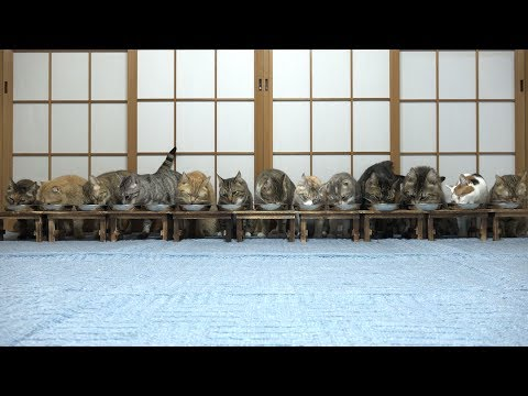 A group of cats eating food at the same time will lighten up your day!