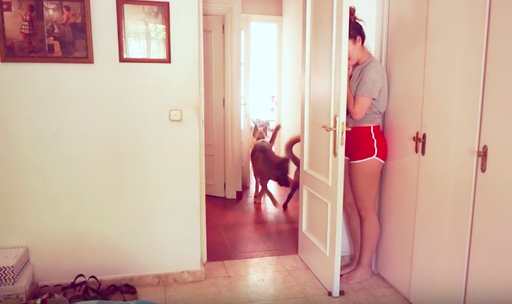 Dogs playing hide and seek with their mom will crack you up!