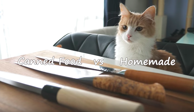 Be surprised by this pet owner making handmade sushi for his two fancy cats
