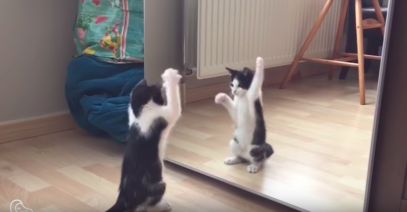 This is what happened when little kitten saw himself in the mirror for the first time...