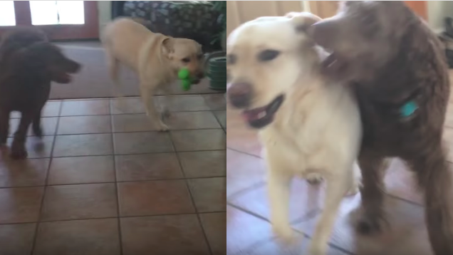 This is what happened when a dog reunited with her best friend...