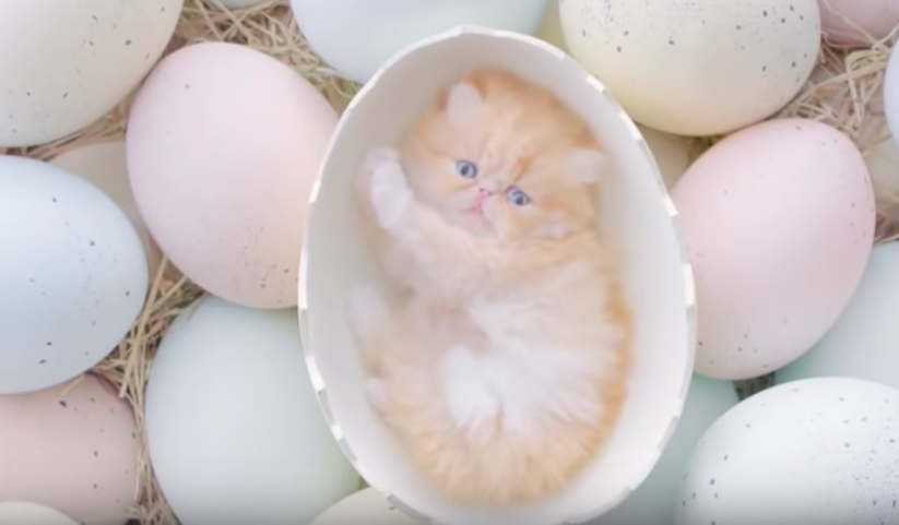 This cat commercial will be the cutest thing that you will see today!