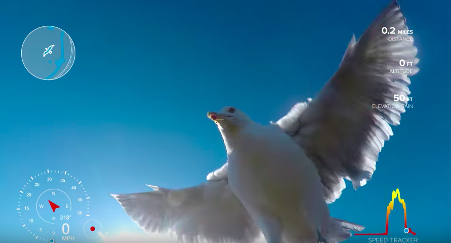 This is what happened when a seagull took a GoPro...
