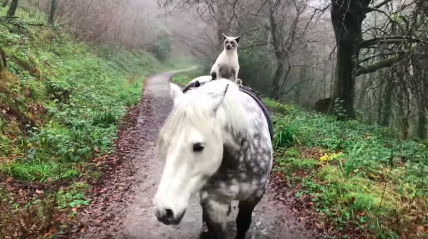 Cat riding a horse will be the cutest thing that you will see today!