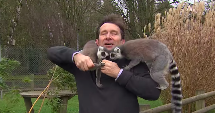 Lemurs mobbing the BBC reporter at zoo will be the funniest thing you will see today!