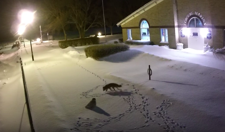 When a fox met an owl in the late night...