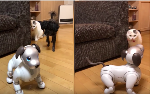 Dog and cat being confused by a robot dog will make you laugh out lout!