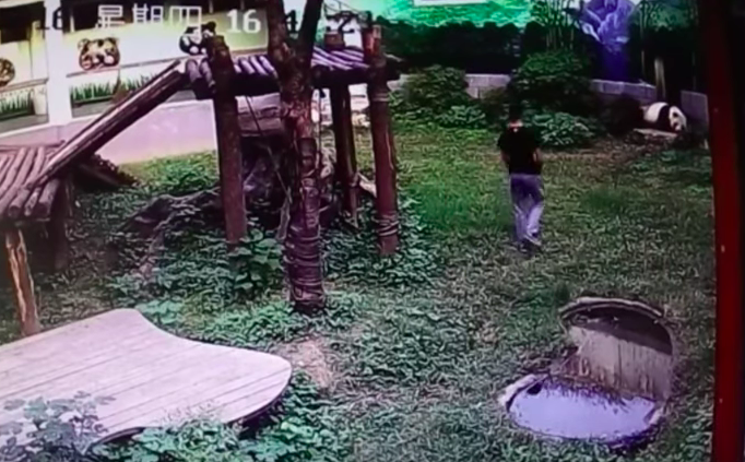 Man jumped into panda den to greet to a panda, but what happened next will crack you up!
