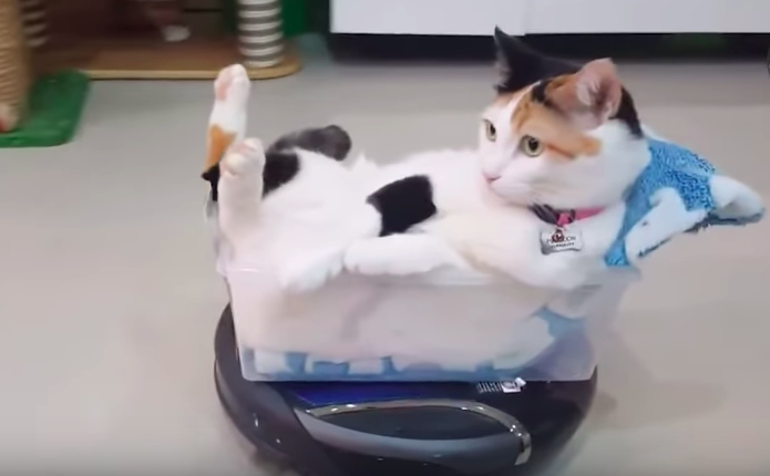 Pets doing cleaning is the cutest thing you will see today!