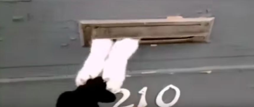 Angry cat trying to stop the mailman to deliver through the mail slot will crack you up!