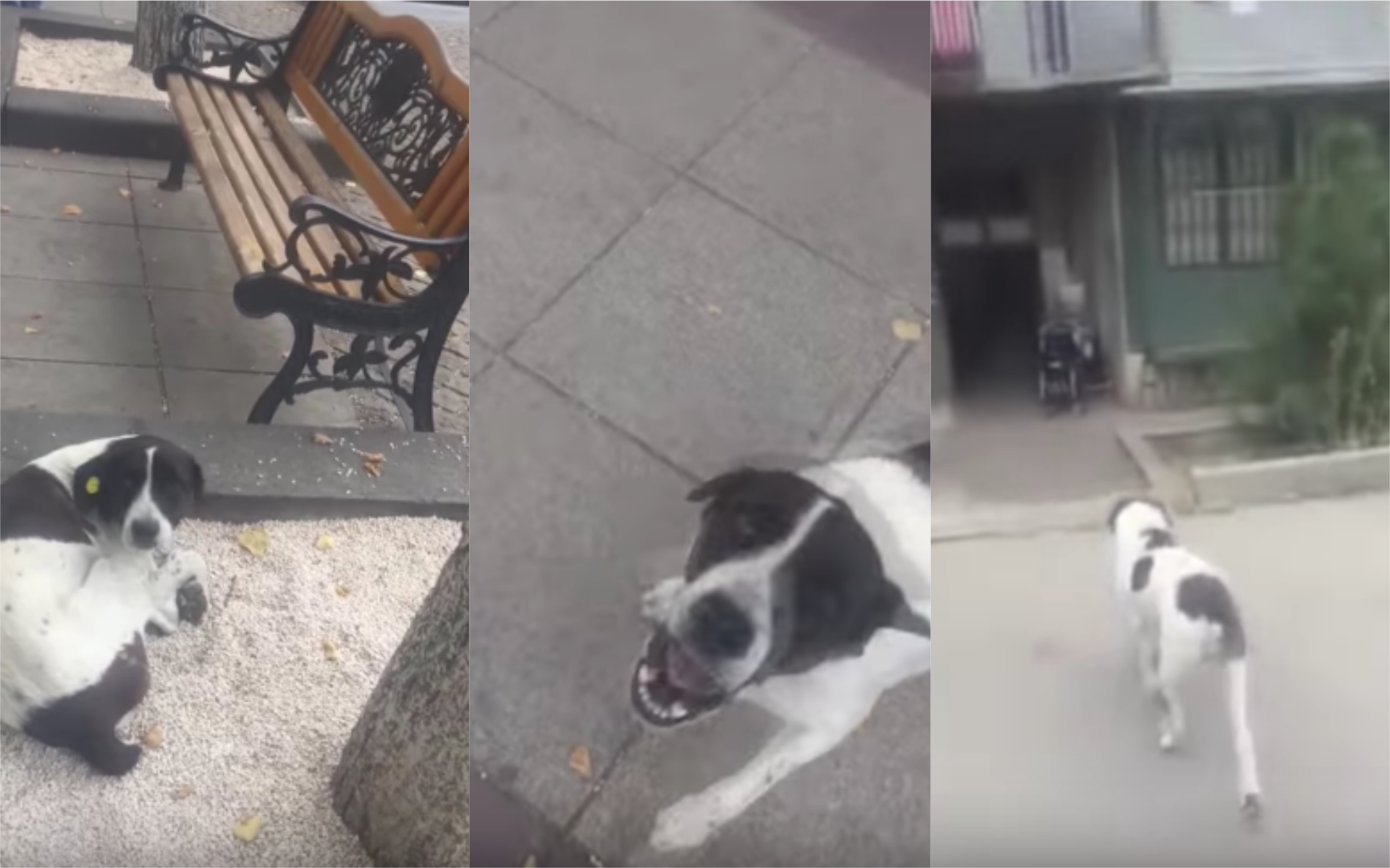 What happened next after this man found his lost dog on the street will make you cry!