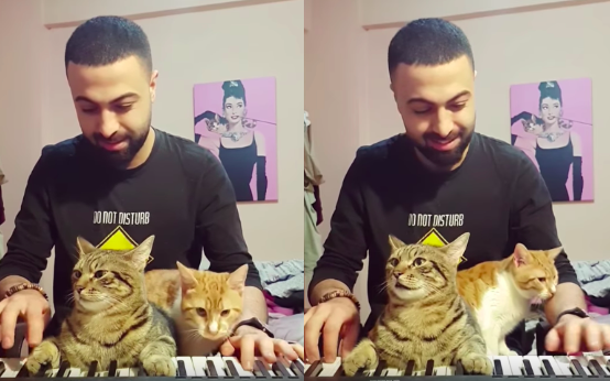 This Guy playing piano with his cats will sooth all your worries!