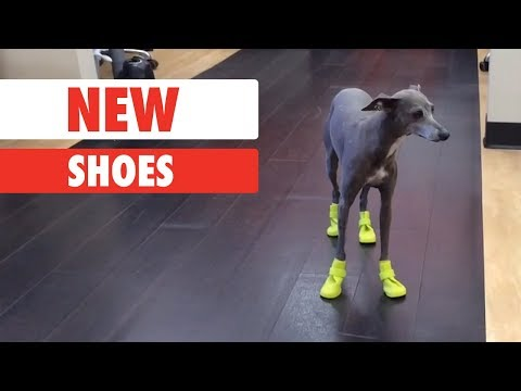 This is what will happen if you buy new shoes in the wrong size...