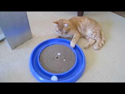 игрушки для котят фото и видео - Фотографии