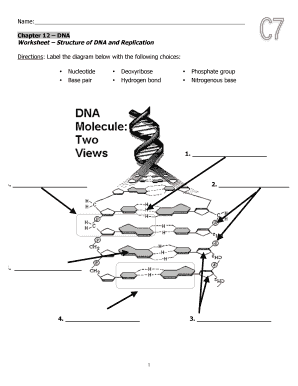 Fillable online asdk12 worksheet dna strucuture and replication fill online ccuart Choice Image