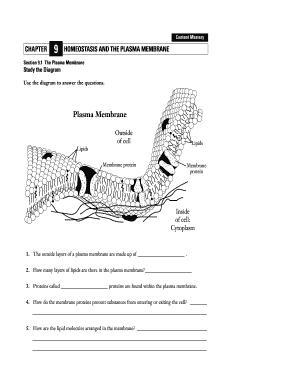 homeostasis worksheet the best and most comprehensive worksheets. Black Bedroom Furniture Sets. Home Design Ideas