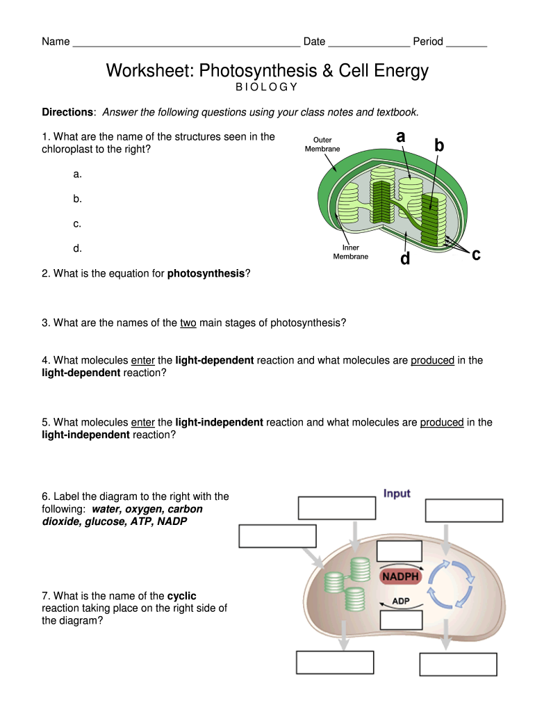Worksheet Photosynthesis And Cell Energy Biology Answer Key 24 Intended For Photosynthesis Worksheet Answer Key