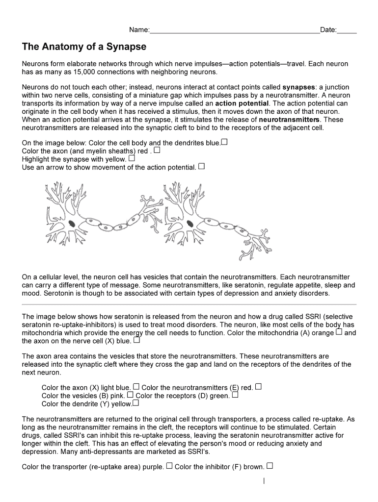 The Anatomy Of A Synapse Worksheet Answers Key - Fill ...