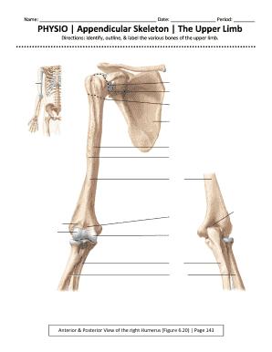 Appendicular Skeleton Worksheet   Fill Online, Printable ...
