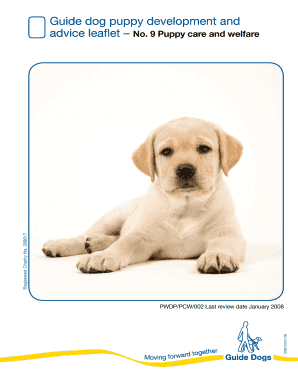 fake dog vaccination records