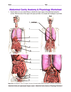 Anatomy And Physiology Worksheets Pdf Fill Online Printable Fillable Blank Pdffiller