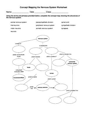 Nervous System Concept Map Answers Nervous System Concept Map   Fill Online, Printable, Fillable
