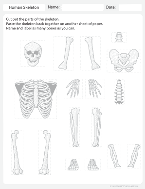 image relating to Printable Skeleton Parts titled Printable skeleton classified with bone names - Fill Out
