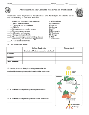 Fillable Online Photosynthesis Cellular Respiration Worksheet Fax ...